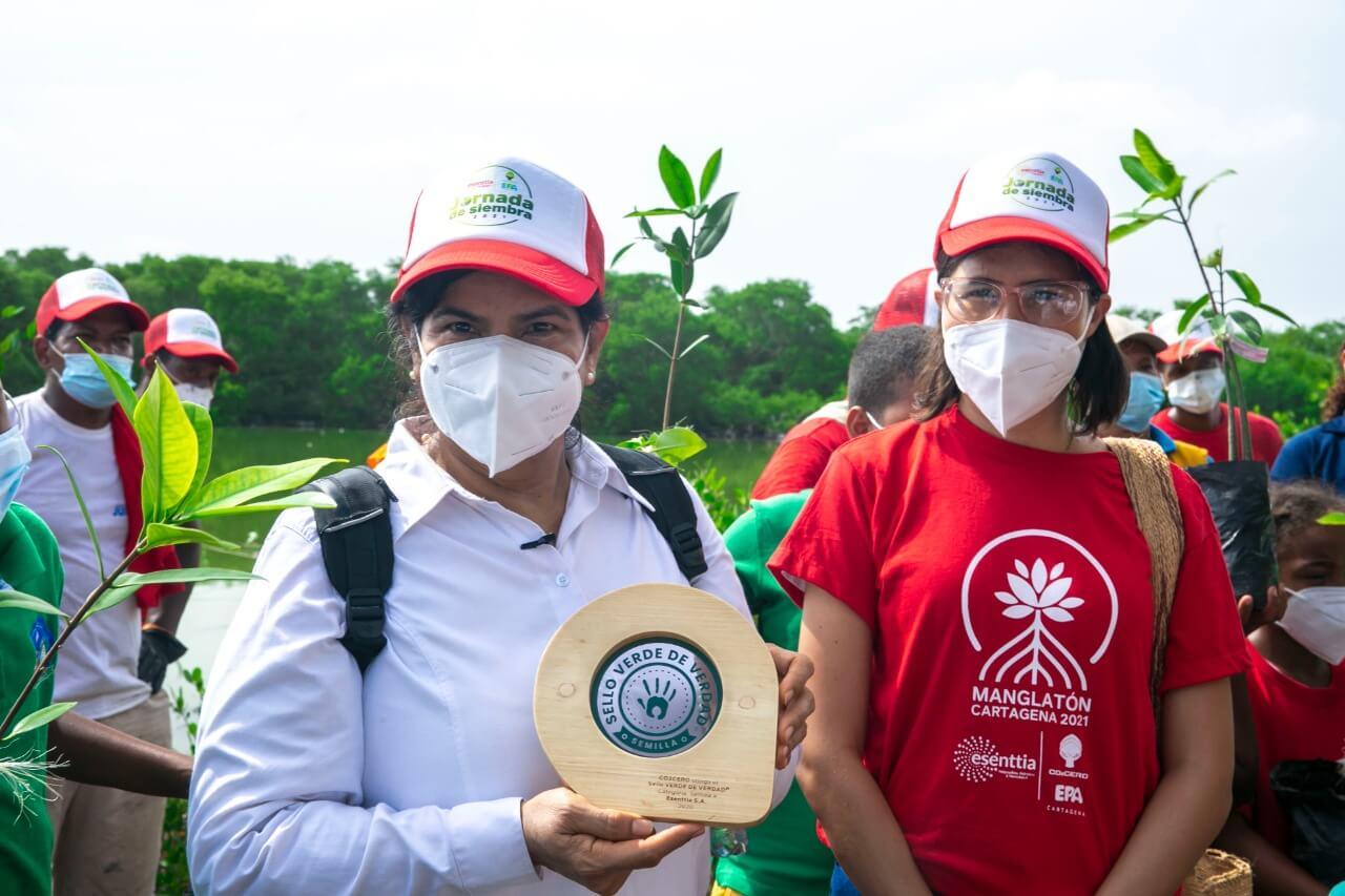 1000 nuevos mangles sembrados para recuperar el ecosistema de la Ciénaga de la Virgen